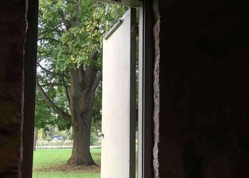 Door opening to show large tree outside
