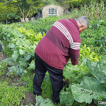 Members of the Church of the Brethren in Spain work in a community garden