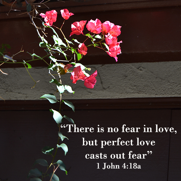 There is no fear in love - text with red flowers